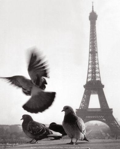 pigeon tour eiffel